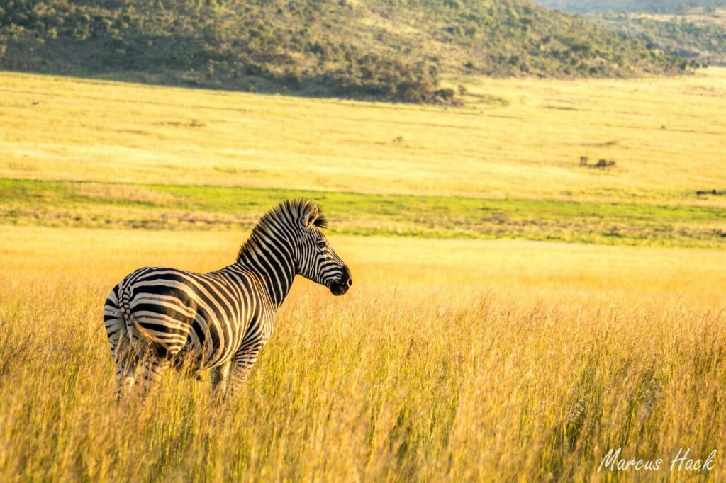 WILDLIFE GALLERY - Mhondoro Safari Lodge & Villa