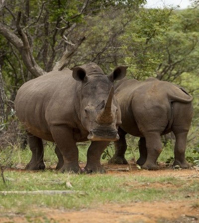 Mhondoro-Game-Lodge-Rhino-Welgevonden