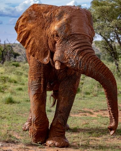 Mhondoro-Safari-Lodge-Villa-Big-5