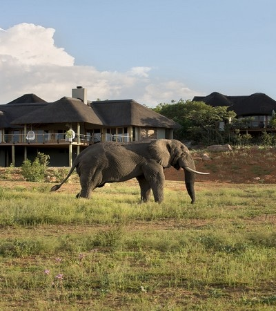 Mhondoro-Game-Lodge-Luxury-Safari-Game-Lodge-South-Africa