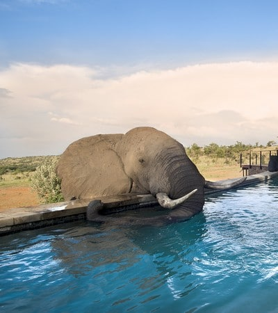 Mhondoro-Game-Lodge-Safari-Elephant