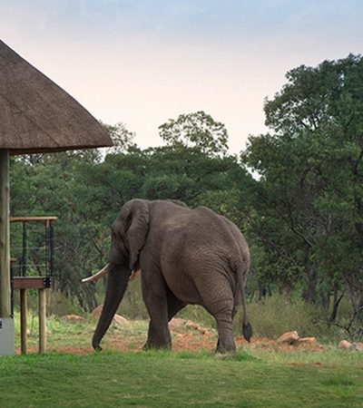 Mhondoro-Safari-Lodge-Villa-Elephant-400x450