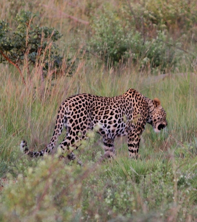 Mhondoro-Safari-Lodge-Villa-Leopard-Mhondoro