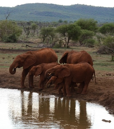 Mhondoro-Game-Lodge-Elephants-drinking