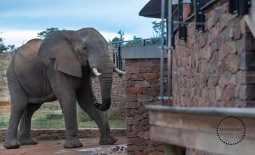 Mhondoro-Safari-Lodge-Villa-Elephant