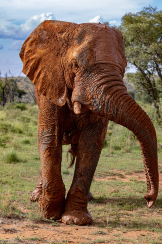 Mhondoro-Safari-Lodge-Villa-Gallery-1